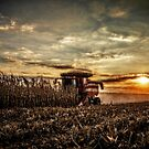 Sunset Harvest by Steve Baird
