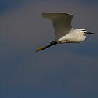 Little Egret by Jon Lees