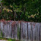 Fall Fence by barkeypf