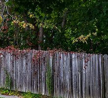 Fall Fence by barkeypf