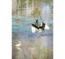 Jabiru Hunting Photographic Print