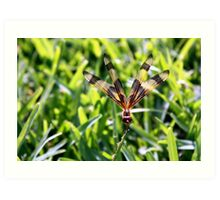 Dragonfly on a blade of grass Art Print