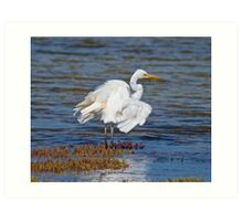 WADER ~ Great Egret by David Irwin Art Print