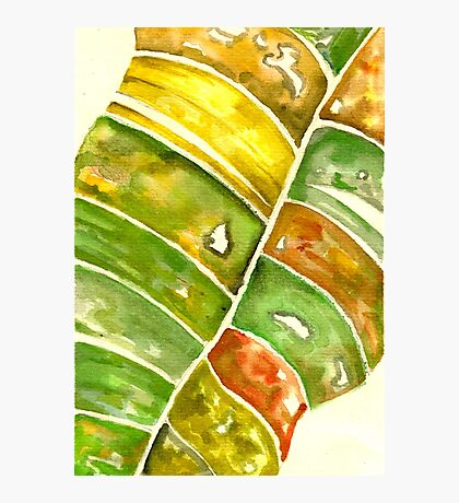 Leaf Watercolor Photographic Print