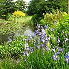 Lily Pond, Hilltop Garden, Hyde Hall, Essex by SunriseRose