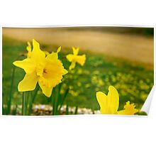 Soft Daffodil... Poster