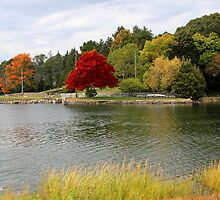 Autumn View of the Mystic River  by SummerJade