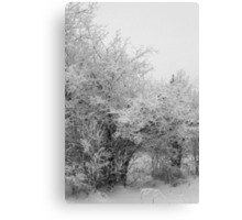 Frost Coated Trees Canvas Print