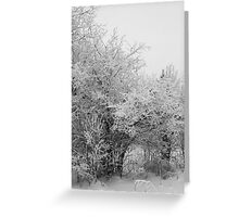 Frost Coated Trees Greeting Card