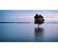 Fanny Bay Mangrove.  Photographic Print