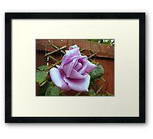 Lonely Rose Framed Print