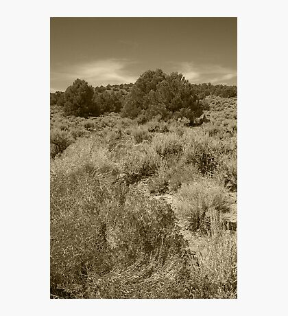 Junipers and Sage Photographic Print
