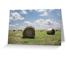 Roll in the Hay Greeting Card