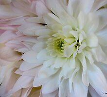 soft coloured petals by Jeannine de Wet