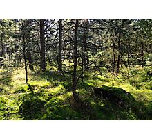 Sunny Woods Photographic Print