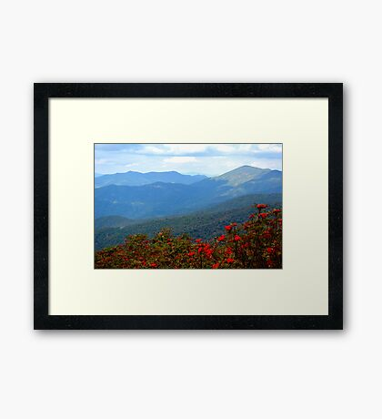 Blues and Berries Framed Print
