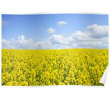 Field Of Rapeseeds Poster
