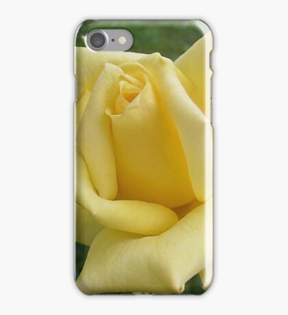 Yellow roses, delicate roses iPhone Case/Skin