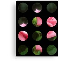 Pink Roses in Anzures 3 Art Circles 2 Canvas Print