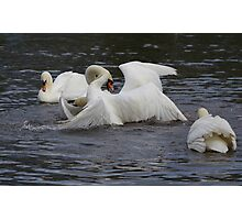 Swans on the lake Photographic Print