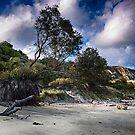Cretaceous Shore by Dave Godden