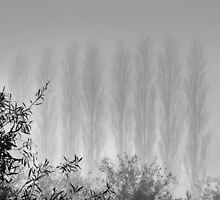 Popplers in the Mist by Geoff Smith