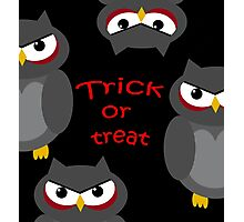 Trick or treat - owls   Photographic Print