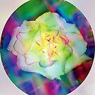 Rainbow rose by ♥⊱ B. Randi Bailey