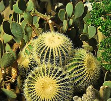 Cactus Contrasts by Penny Smith