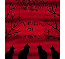 Trick or treat - black cats Photographic Print