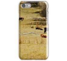 Lounging cows iPhone Case/Skin