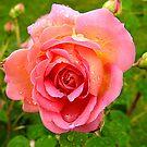 Jubilee Rose by Barnbk02