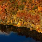 Blue & Gold - Signal Mountain, Tennessee by Alex Zuccarelli