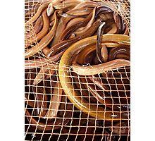 Entangled Eels - Da Lat, Vietnam Photographic Print