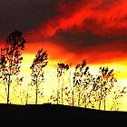 Midwestern Sundown by LeeAnn Kramer