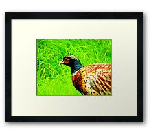 Pheasant One Framed Print