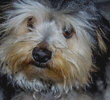 puppy by kingiephotos