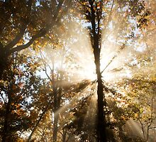 Radiant - Racoon Mountain, Tennessee by Alex Zuccarelli