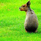 Rear-Profile Mara by Barnbk02