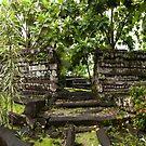 Inner Nan Douwas - Pohnpei, Micronesia by Alex Zuccarelli