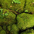 Mossy Coral Cobbles - Pohnpei, Micronesia by Alex Zuccarelli