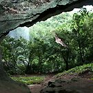 Pahntakai Bat Cave - Pohnpei, Micronesia by Alex Zuccarelli