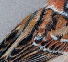 The Sparrow Sticker
