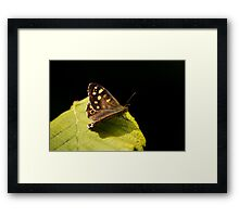 Butterfly On Leaf Framed Print