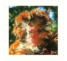 Spike the Firebird - Frizzled Polish Rooster Art Print