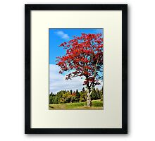 Nature's Torch Framed Print