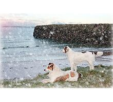 beach view with two dogs Photographic Print