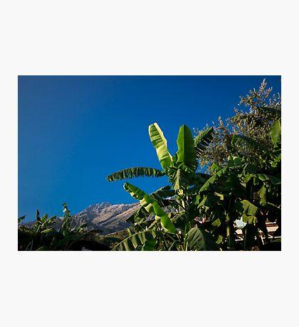 Banana Tree Reaching for the Sun Photographic Print