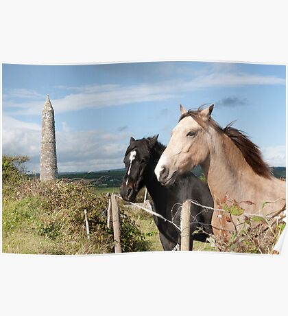 beautiful pair of Irish horses Poster