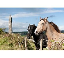 beautiful pair of Irish horses Photographic Print